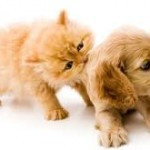 Can Pheromones Be Used on Your Pets?